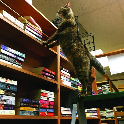 bookstore_cats4