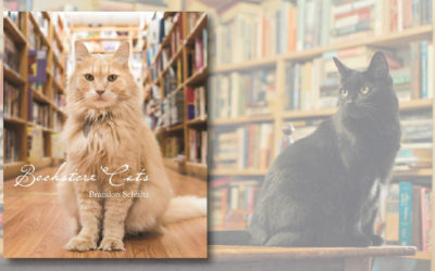Bookstore Cats