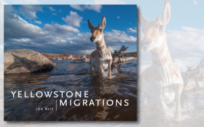 Yellowstone Migrations: Preserving Freedom to Roam