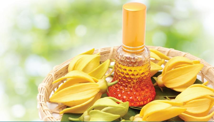 Essential Oils 6